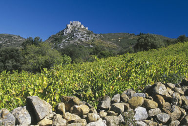 Vignes_Maitres_Vignerons_De_Cascastel